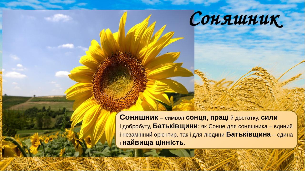 Соняшник – символ сонця, праці й достатку, сили і добробуту, Батьківщини: як Сонце для соняшника – єдиний і незамінний орієнтир, так і для людини Б...