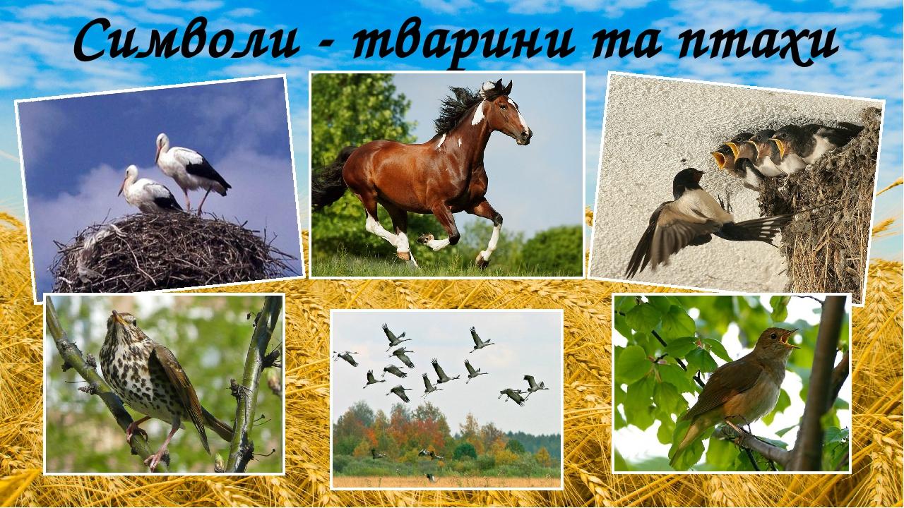 Символи - тварини та птахи