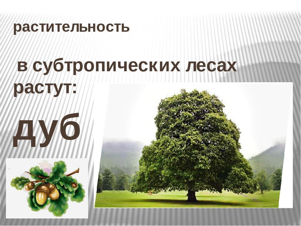 растительность в субтропических лесах растут: дуб