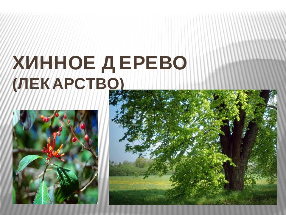 ХИННОЕ ДЕРЕВО (ЛЕКАРСТВО)