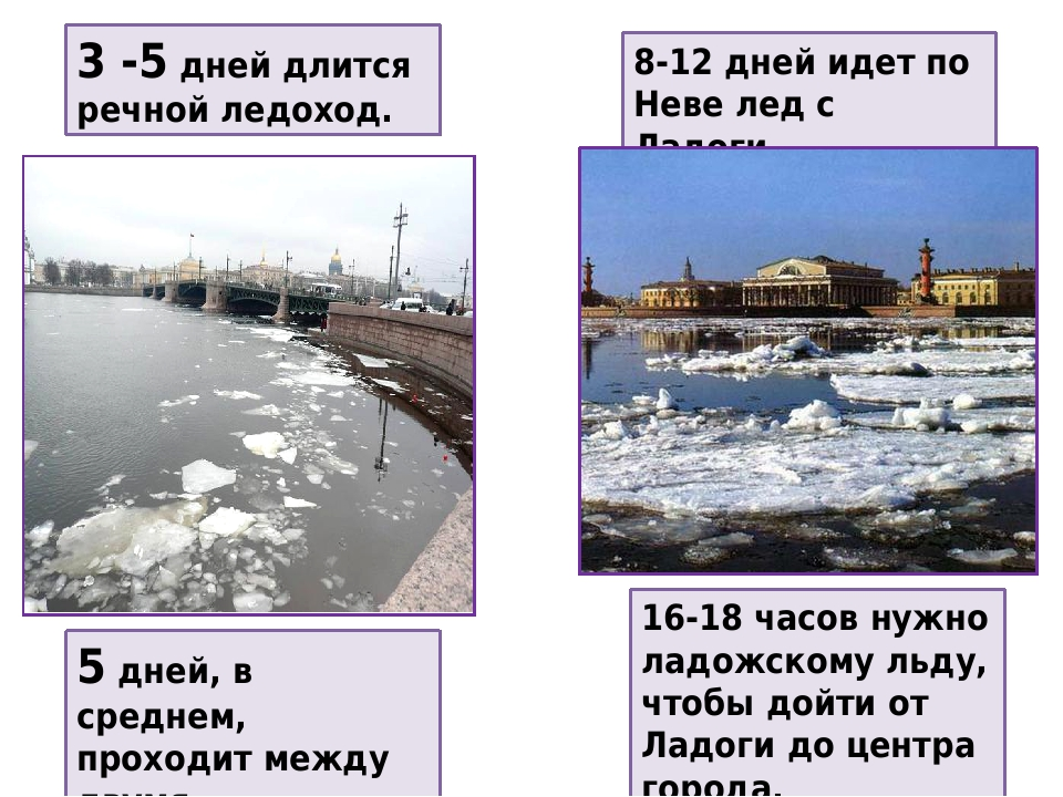3 -5 дней длится речной ледоход. 8-12 дней идет по Неве лед с Ладоги. 5 дней, в среднем, проходит между двумя ледоходами. 16-18 часов нужно ладожск...