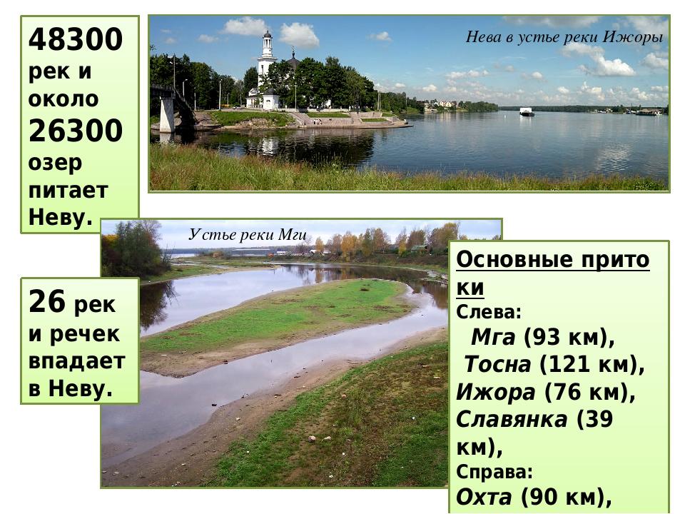 48300 рек и около 26300 озер питает Неву. Нева в устье рекиИжоры 26 рек и речек впадает в Неву. Устье реки Мги Основныепритоки Слева: Мга (93 к...