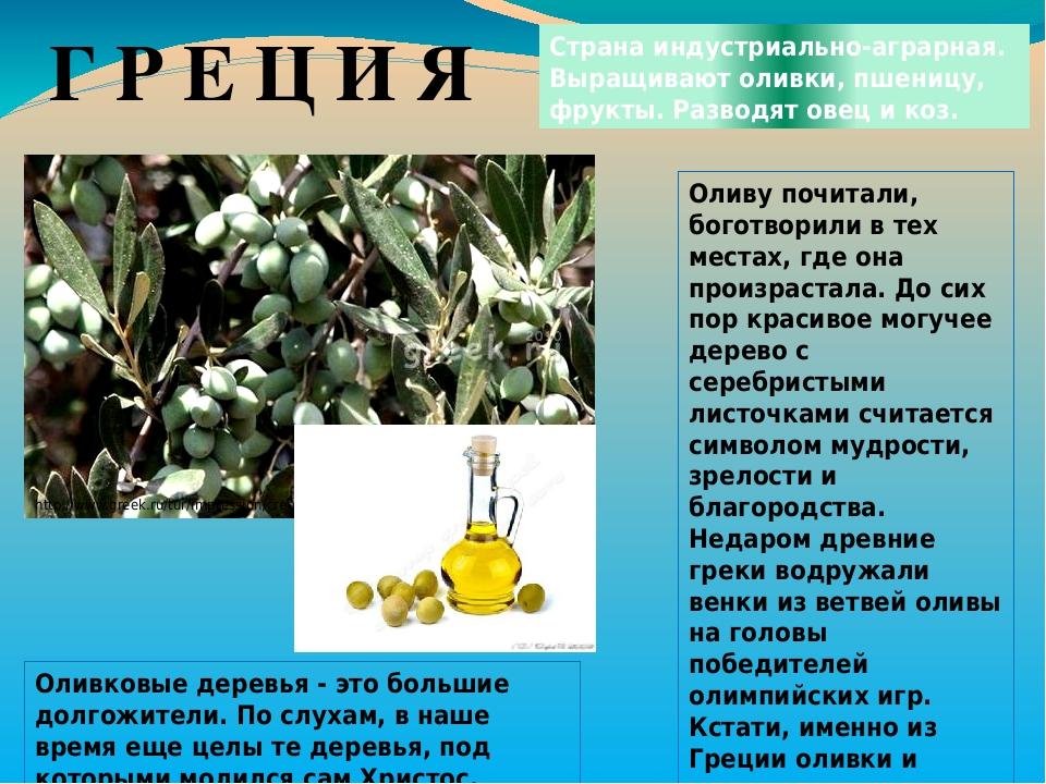 Г Р Е Ц И Я Страна индустриально-аграрная. Выращивают оливки, пшеницу, фрукты. Разводят овец и коз. http://www.greek.ru/tur/impression/crete/55853....