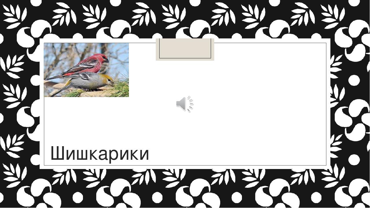 Диктант Шишкарики