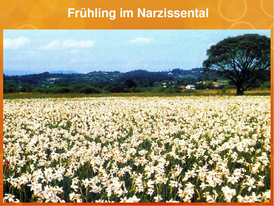 Frühling im Narzissental
