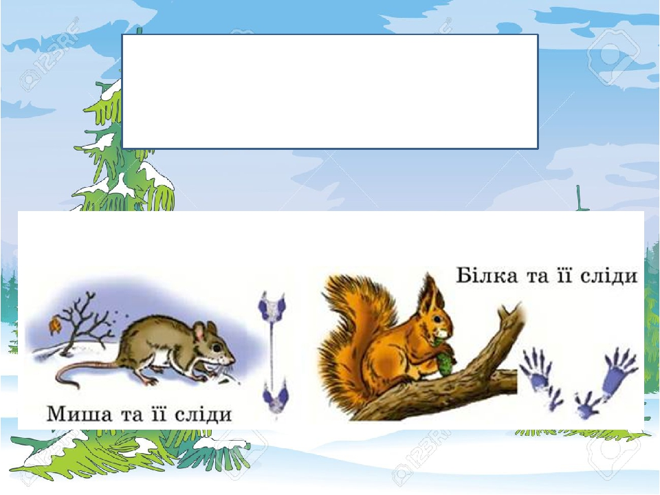 Порівняйте сліди миші і білки.