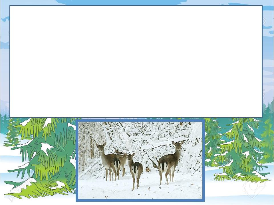 Козулі взимку збираються в табунці. Верховодять у них завжди старі самки, а самці тримаються позаду. Живляться козулі молодими пагонами кущів і дер...