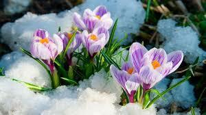 Весна в Украину придет 26 марта - метеорологи пообещали украинцам  потепление | ubr.ua