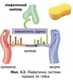 http://narodna-osvita.com.ua/uploads/zholos-8-bio/zholos-8-bio-66.jpg