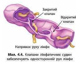 http://narodna-osvita.com.ua/uploads/zholos-8-bio/zholos-8-bio-68.jpg
